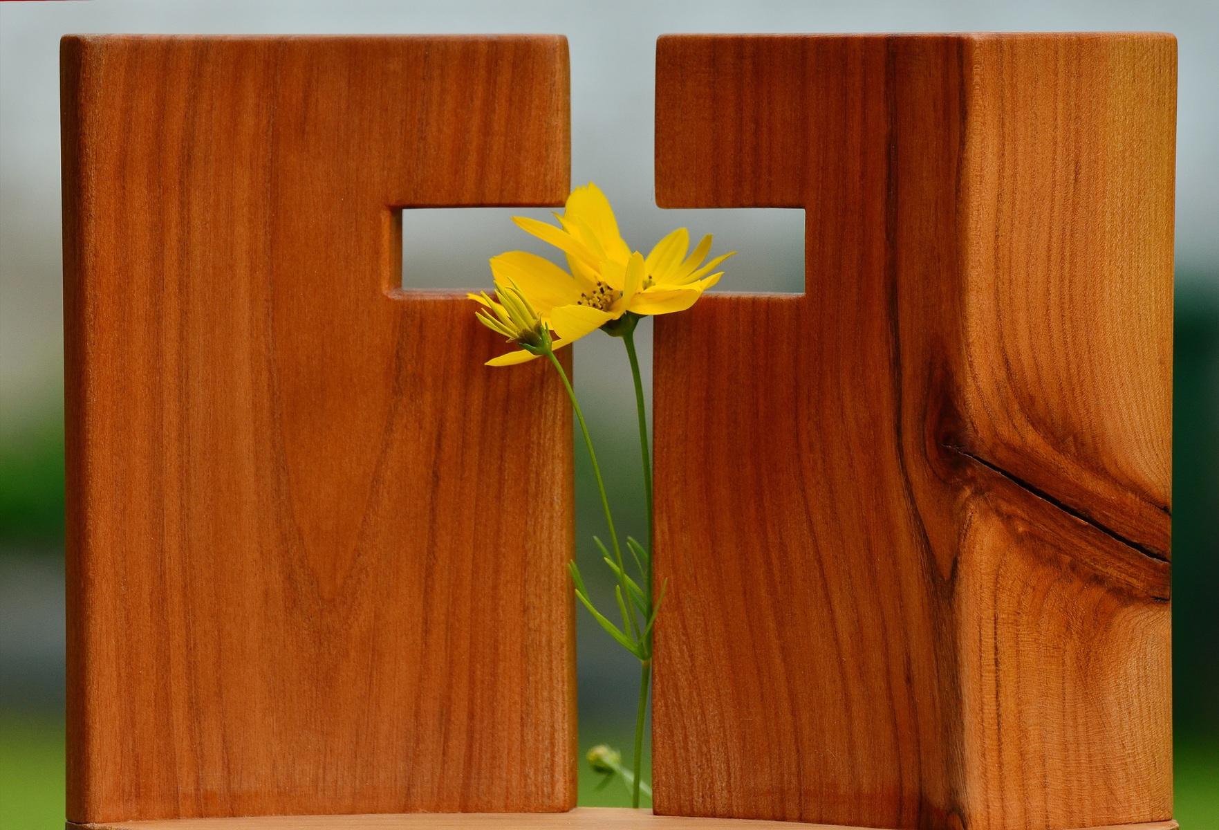 wood-flower-live-green-symbol-religion-578137-pxhere.com